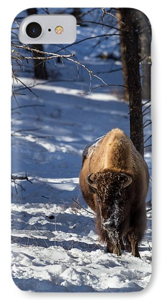Bison In Winter IPhone Case