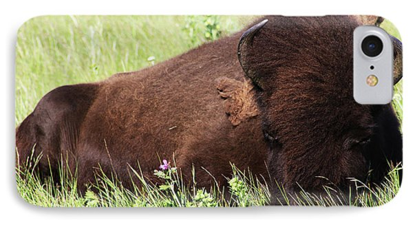 IPhone Case featuring the photograph Bison Nap by Alyce Taylor