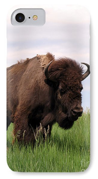Bison On The Prairie Phone Case by Olivier Le Queinec