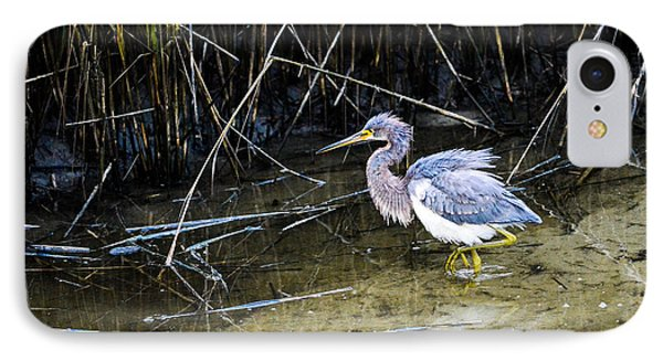 Bittern At Dusk  IPhone Case by Mary Ward