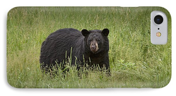 Black Adult Bear Outside Of Orr Minnesota IPhone Case by Randall Nyhof