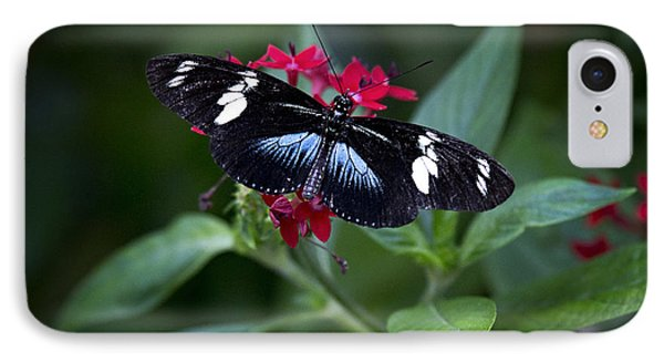 Black And Blue Butterfly IPhone Case