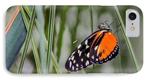 Black And Orange On Grasses IPhone Case by Karen Stephenson