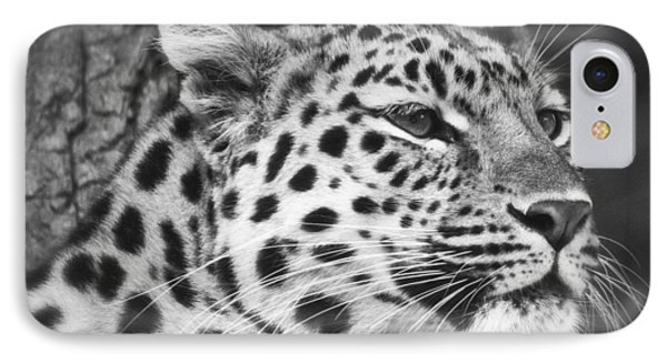 Black And White - Amur Leopard Portrait IPhone Case by Chris Boulton