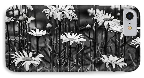 Black And White Daisies IPhone Case
