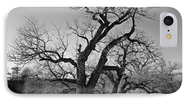 IPhone Case featuring the photograph Black And White Oak by Janice Westerberg