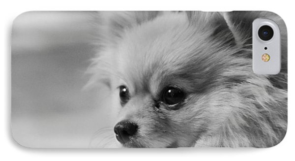 Black And White Portrait Of Pixie The Pomeranian IPhone Case