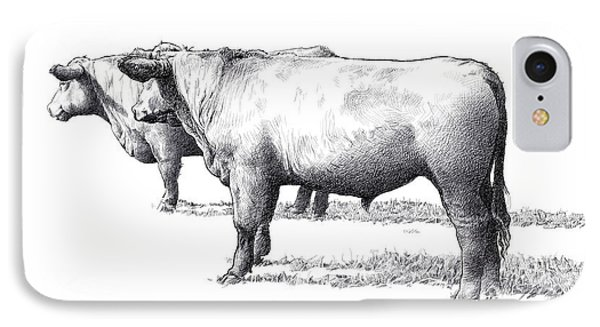 Black Angus Steers On Almshouse Road Phone Case by William Beauchamp