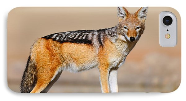Black-backed Jackal IPhone Case by Johan Swanepoel