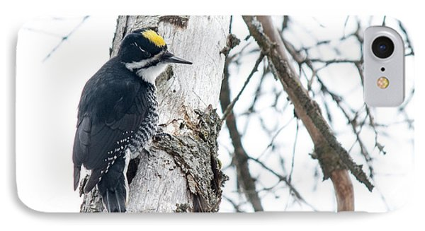 Black-backed Woodpecker IPhone Case by Cheryl Baxter