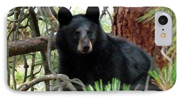 Black Bear 1 IPhone Case by Will Borden