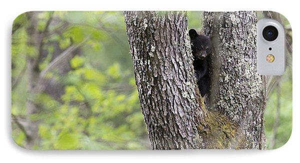 Black Bear Cub In Fork Of Tree Phone Case by Dan Friend
