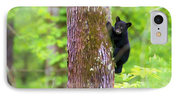 Black Bear Cub In Tree Phone Case by Dan Friend