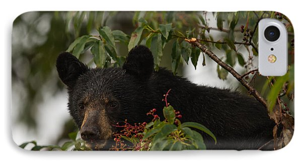 IPhone Case featuring the photograph Black Bear by Doug McPherson