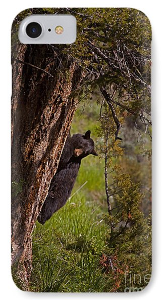 IPhone Case featuring the photograph Black Bear In A Tree by J L Woody Wooden