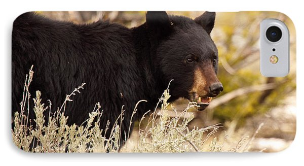 IPhone Case featuring the photograph Black Bear Showing Teeth by Max Allen