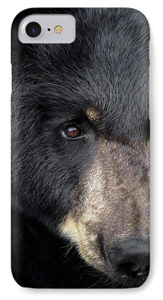 Black Bear IPhone Case by TnBackroadsPhotos