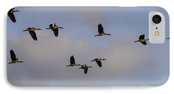 Black-bellied Whistling Ducks IPhone Case