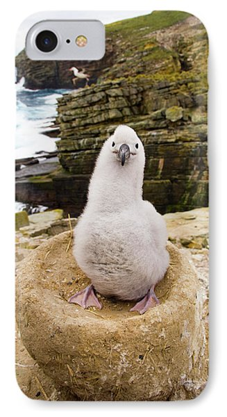 Black-browed Albatross Chick Falklands IPhone 7 Case by