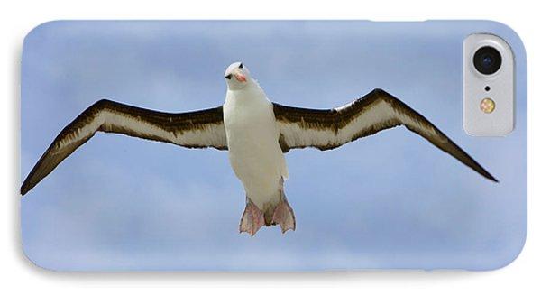Black-browed Albatross Flying IPhone Case by Yva Momatiuk John Eastcott