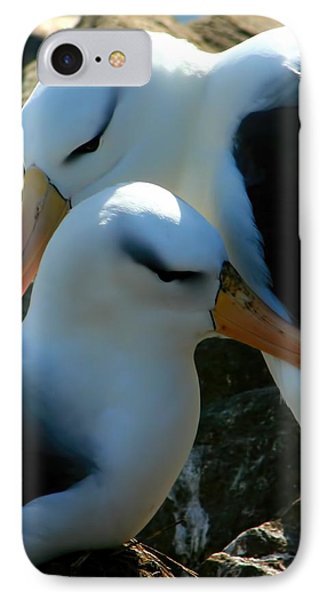 Black Browed Albatross Pair IPhone Case