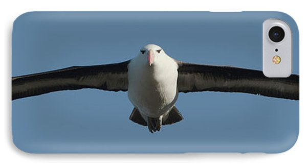 Black-browed Albatross Thalassarche IPhone Case by Panoramic Images