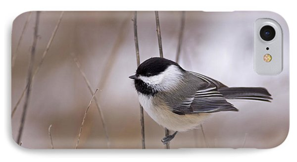 Black-capped Chickadee IPhone Case by Brian Magnier