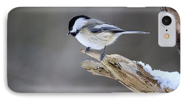Black-capped Chickadee IPhone Case by Gary Hall