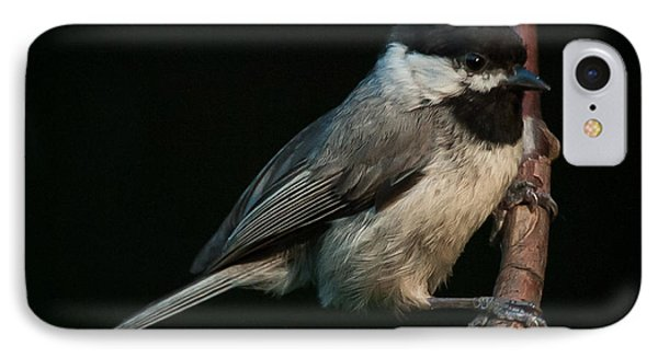Black-capped Chickadee IPhone Case by Jim Moore