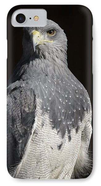 Black Chested Buzzard-eagle No 1 IPhone Case by Andy-Kim Moeller