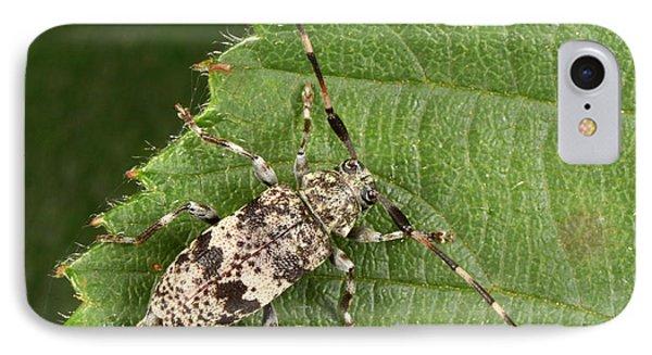 Black-clouded Longhorn Beetle IPhone Case