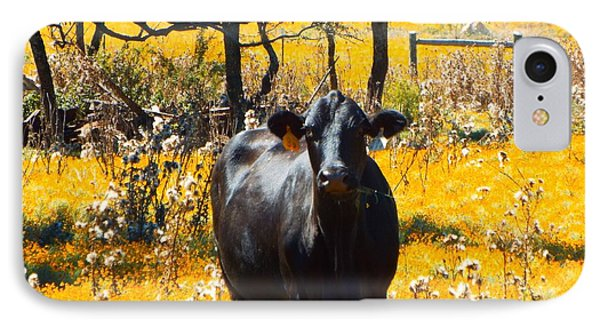 Black Cow And Field Flowers IPhone Case by Cindy Croal
