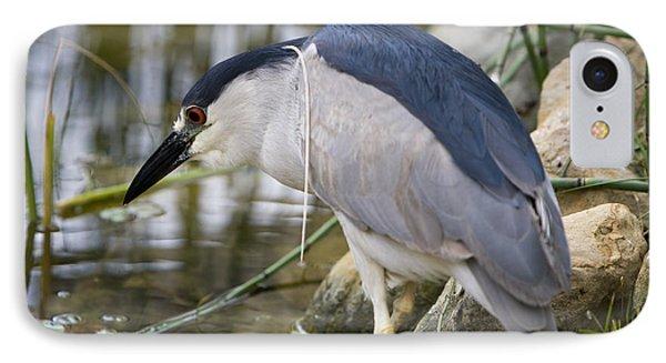 Black-crown Heron Going Fishing IPhone Case by David Millenheft