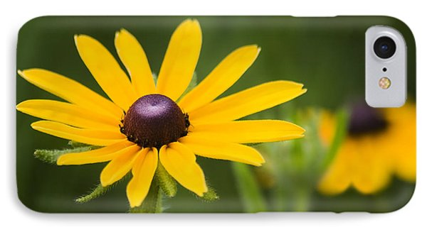 Black Eyed Susan Phone Case by Adam Romanowicz