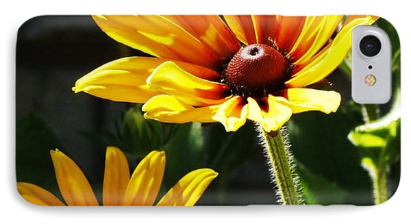 Black Eyed Susan IPhone Case by Al Fritz
