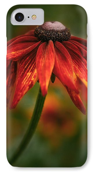 Black-eyed Susan IPhone Case by Jacqui Boonstra