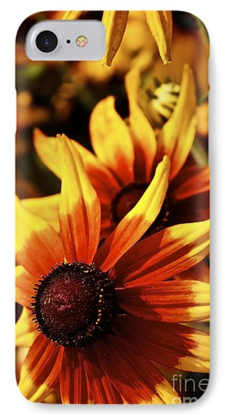 Black Eyed Susan IPhone Case by Linda Bianic
