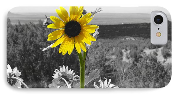 IPhone Case featuring the photograph Black-eyed Susan by Tom DiFrancesca