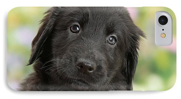 Black Flat Coated Retriever Puppy IPhone Case by Mark Taylor