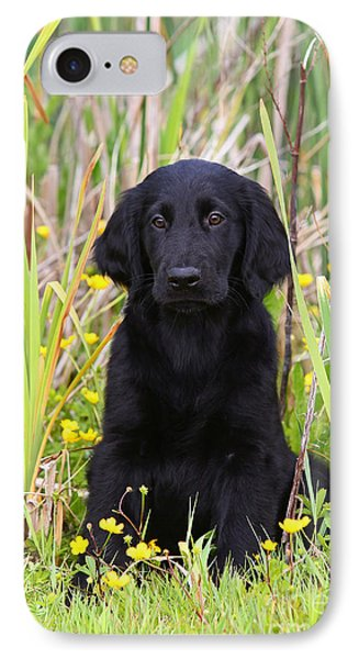 Black Flat Coated Retriever Puppy Sitting In Reed IPhone Case by Dog Photos