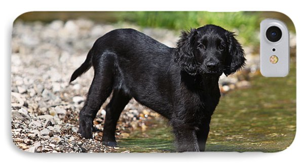 Black Flat Coated Retriever Puppy Standing In Water IPhone Case by Dog Photos