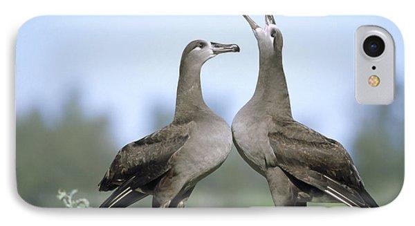 Black-footed Albatross Courtship Dance Phone Case by Tui De Roy