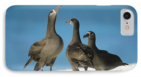 Black-footed Albatross Gamming Group Phone Case by Tui De Roy