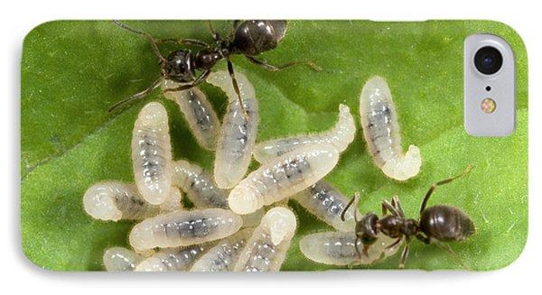 Black Garden Ants Carrying Larvae IPhone Case by Nigel Downer