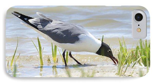 Black Headed Gull IPhone Case