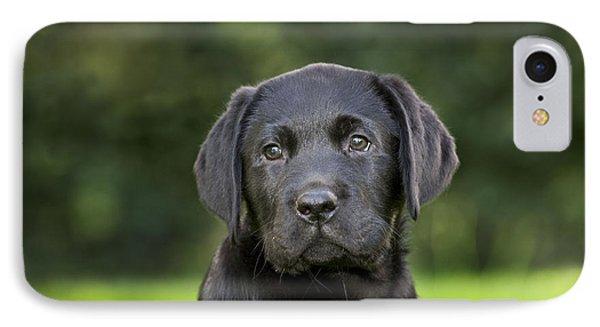 Black Labrador Puppy IPhone Case
