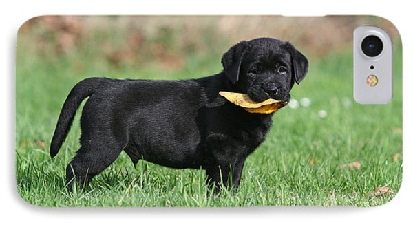 Black Labrador Retriever Puppy With Leaf  IPhone Case by Dog Photos