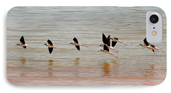 Black-necked Stilt - Lake Powell IPhone Case by Julie Niemela