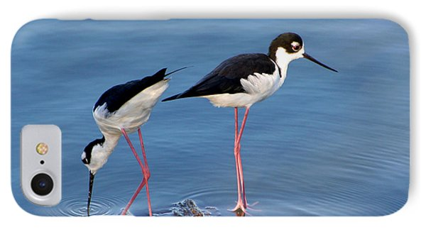 IPhone Case featuring the photograph Black-necked Stilts by Bob and Jan Shriner