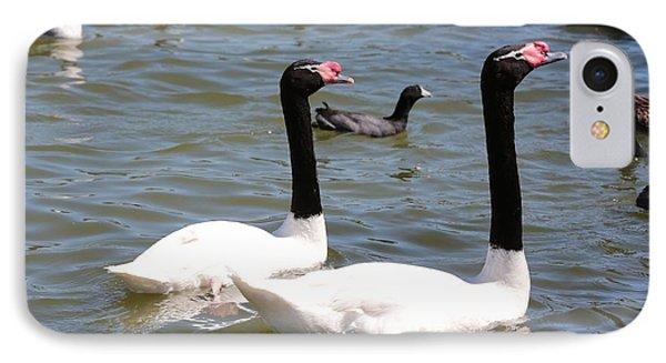 Black-necked Swans IPhone Case by Carol Groenen